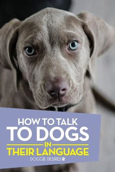 How to talk to dogs in their language >> http://doggiedesires.com/how-to-talk-to-dogs-in-their-language/