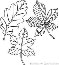 Coloriage feuille d 39 automne dessin 3 tap pinterest automne coloriage et feuille automne - Coloriage feuille d arbre ...