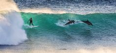 Surfing with Dolphins by Matt Hutton