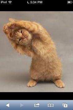 Gymnastics cat