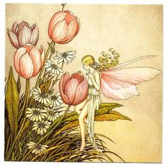 Австралийская художница Ida Rentoul Outhwaite (1888 – 1960)