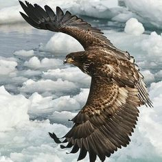 Golden Eagle Represents To The Celtic Peoples A Higher Spiritual Awackening…