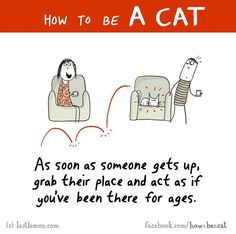 how-to-be-a-cat-funny-illustration-last-lemon-84__880