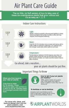 Air Plant Care instructions, in an infographic.  Easy to follow watering, temperature, and lighting info.: