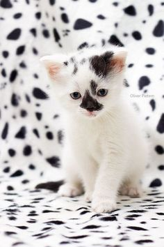 And the Cutest Polka-Dot Kitteh award goes to....