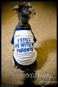 I still live with my parents :)   #Schnauzer