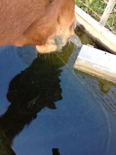 Is your horse dehydrated?  How to tell!   http://www.proequinegrooms.com/index.php/tips/grooming/is-your-horse-dehydrated/