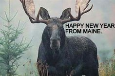 Happy New Year From Maine....