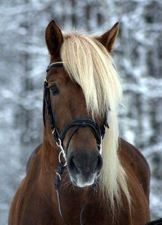 h-0-r-s-e-s:    Finnish Stallion.