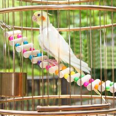 【 $2.02 & Free Shipping / Coupons 】Small Birds Toys Pet Accessories Drawbridge Wooden Singing Cockatiel Parrot | Buying & Reviews on AliExpress