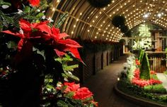 CYM cellists and violinists will perform for Candlelight Evenings at Phipps on Dec. 9 at 3:00. Gorgeous for the eyes and the ears!