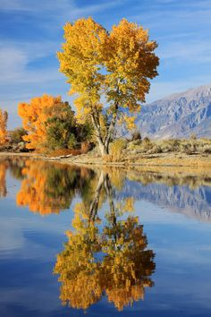 Bishop, California; photo by .Bert Dennison