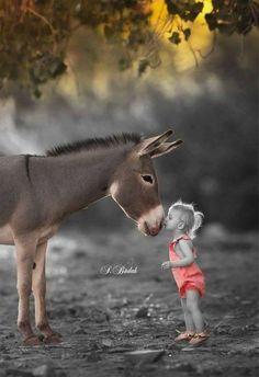 Donkey and girl kids barn, baby animals, animals and pets, animals for kids Cute Animals Puppies, Baby Puppies, Animals For Kids, Cute Baby Animals, Animals And Pets, Cute Animal Videos, Cute Animal Pictures, Kids Barn, Animal Hugs