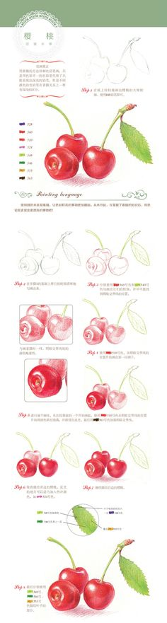 Cherry drawing. Color pencil techniques. Step by step  tutorial for beginner.  Berry illustration. 本案例摘自人民邮电出版社出版的《幸福生活...