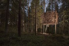 Bird's Nest Tree House – http://treehouselove.com/post/82990587673/birds-nest-tree-house