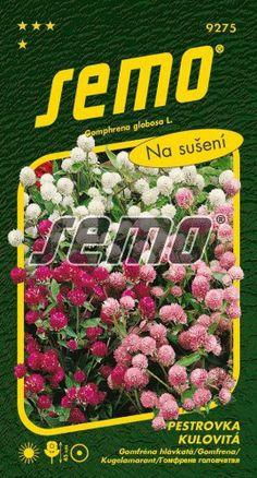 HOBBY, Květiny letničky – Pestrovka kulovitá směs, 9275