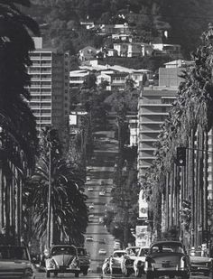 Doheny Drive in Beverly Hills by Julian Wasser. 1962...  my commute home from work!