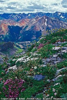 Alpine meadow and Red Mountain from Imogene Pass, Mt. Sneffels Wilderness, Colorado ~ © Adam Jones*