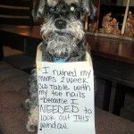 My nails are great for traction!--- My dog on Dog-shaming.com