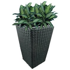Hand-woven plastic rattan over metal frame and includes plastic liner with removable drain plug for indoor or outdoor use. Available in three sizes and four colors (black shown here). Rattan Planters, Planter Pots, Drain Plugs, Hand Weaving, Indoor, Plastic, Metal, Colors, Frame