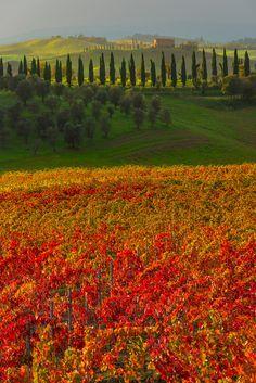 Autumn in Val d'Orcia Region, Tuscany, Italy