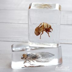 Insects Cast in EasyCast Clear Casting Epoxy - Resin Crafts Recycled Paper Crafts, Diy Resin Crafts, Clear Casting Resin, Clear Resin, Beach Rocks Crafts, Rock Crafts, Easycast Resin, Resin Spray, Resin Coating