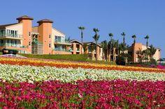 Grand Pacific Palisades resort - Dr. Kong told me about it - right next to LEGOLAND, condo suites with full kitchens, entrance right into LEGOLAND, next to Cosco for groceries.