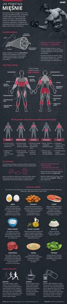 Jak powstają mięśnie? [INFOGRAFIKA] - Facet