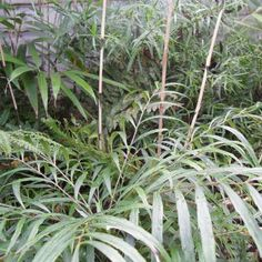 Create a breathtaking and exotic tropical plant filled garden that will survive the UK climate. Tropical Plants Uk, Small Tropical Gardens, Tropical Landscaping, Garden Border Plants, Garden Borders, Planting, Gardening, Large Plants, Outdoor Projects