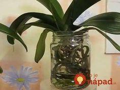 Pred pol rokom bola moja orchidea na vyhodenie: Stačila len 1 zmena a hneď nahodila puky - odvtedy mi kvitne nonstop! Garden Crafts, Garden Art, Photo Fair, Alnwick Castle, Covered Garden, Small Farm, All Flowers, Garden Paths, Art Tutorials