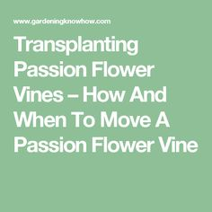 Transplanting Passion Flower Vines – How And When To Move A Passion Flower Vine