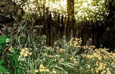 #fence #grass