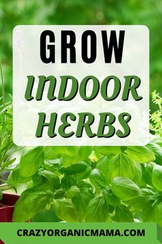 Grow Kitchen Herbs If you love using herbs in your cooking, growing them yourself is the best money- Container Plants, Container Gardening, Herb Gardening, Indoor Gardening, Growing Herbs Indoors, Growing Plants, Herb Garden Design, Garden Ideas, Vertical Garden Diy