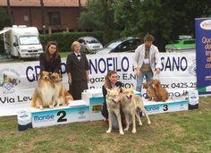 Oblivion & Caramella di Fossombrone BEST IN SHOW COPPIE alla Expo' Nazionale Canina di Albarella 2016!!!!!!!