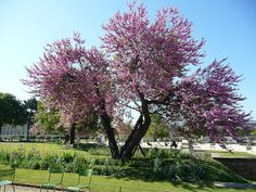 1000 images about flora of provence on pinterest white - Arbres de jardin ...