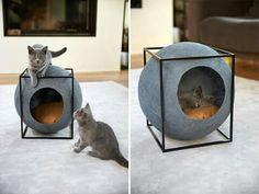 roomcat