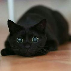 Que amor! Un bel chat noir! Je t'aime! Black cats are people too...