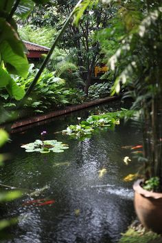 Pool @ Jim Thompson House Museum, Bangkok.  Gorgeous place - can't wait to return.