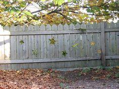 Fence Beach House Colors, Wedding Doors, Side Porch, Fence Art, Good Neighbor, Wood Creations, Farm Gardens, Outdoor Photography, Arbor Ideas