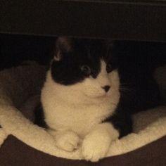 Claude the cat in comfort
