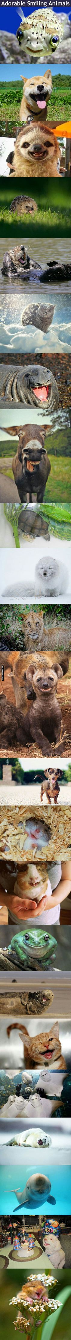 Adorable Smiling Animals cute animals dogs adorable dog puppy animal pets funny pictures funny animals