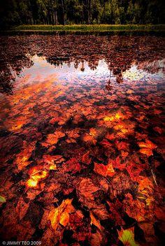 The Fallen, taken in Hyde Park by JimzT