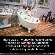 Stupid Funny Memes, Funny Animal Memes, Cute Funny Animals, Funny Relatable Memes, Funny Animal Pictures, Cat Memes, Funny Cute, Cute Cats, Weird Facts