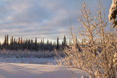 Winter Calm at Sunrise Winter calm alonga slough near North Pole, Alaska Hugh's Weekly Photo Challenge: Week 17 – Calm