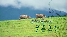 Sungkwang Baptist Church Weekly News 2017-05-21 주일뉴스-VIP초청잔치, 체육대회, 호산나마...