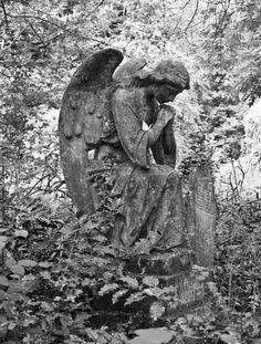 MATIN LUMINEUX: le cimetière des Anges