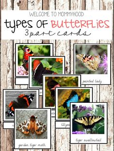 Montessori Activities: Types of butterflies 3 part cards by Welcome to Mommyhood #montessoriactivities, #montessori, #springactivities, #preschoolactivities, #zoology, #butterflies