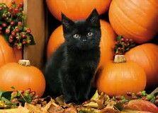 Image Result For Black Cat Halloween Wallpaper