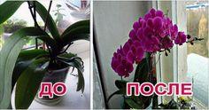 Хотите, чтобы ваша орхидея цвела как можно чаще? Есть очень простой способ, проверенный многими хозяйками!