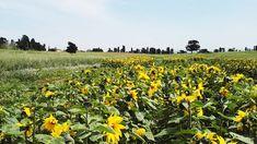 #Agricoltura: sono sempre di più i giovani che scelgono questa strada